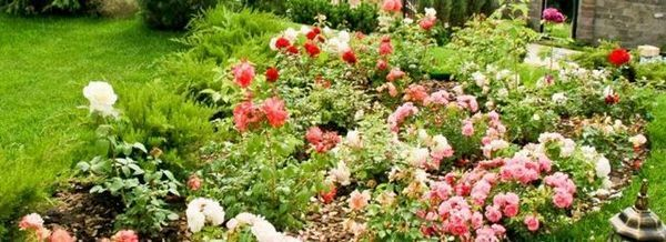 Че цветната градина не беше празна