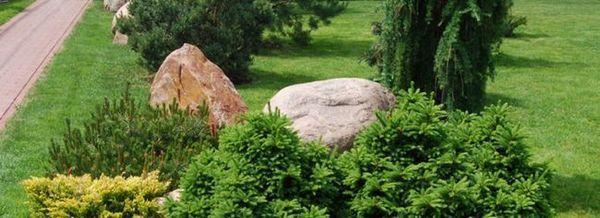 Иглолистни скали в ландшафта на обекта