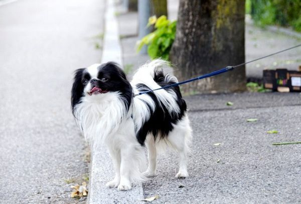 Японски ин на разходка