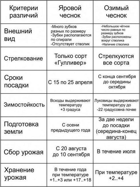 Сравнителна таблица за пролетен и зимен чесън