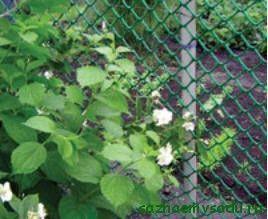 Как да изберем градинска решетка за ограда
