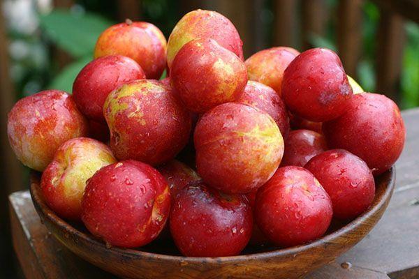 Плодове от китайски сливи