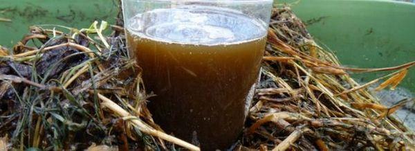 Компост чай - описание на чая от червеи