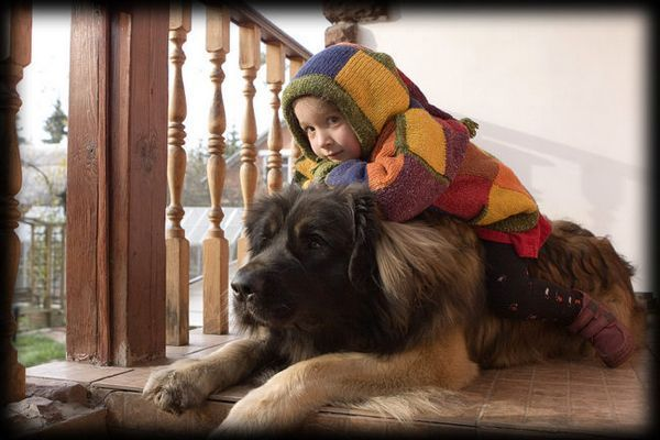 Леонбъргър и детето