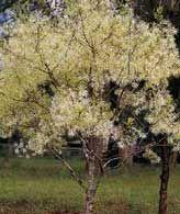 Листа и цветя на дърветата