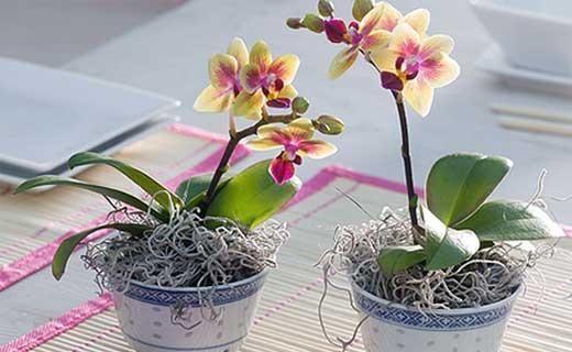 Мога ли да напоявам орхидеята отгоре, особено грижи, съвети