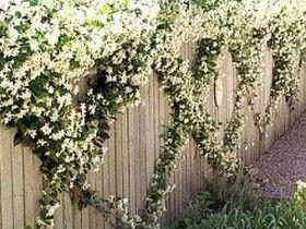 Градинска ограда, прикрита от растения