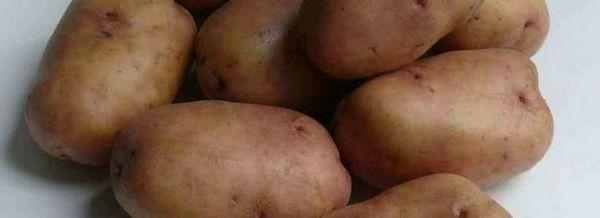 Нови сортове картофи за различни региони