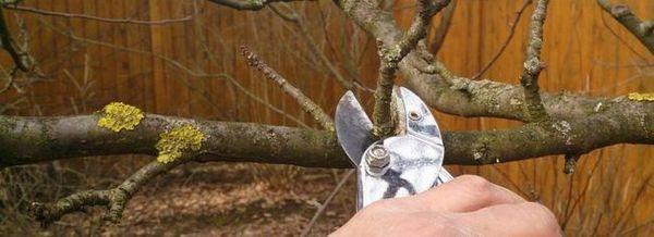 Подрязване на ябълкови дървета