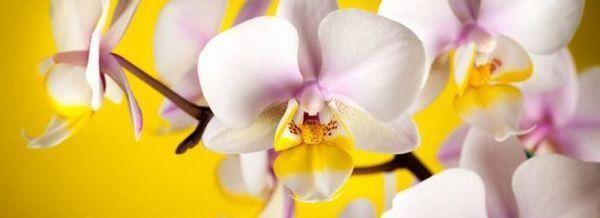 Грешки в грижите за орхидеи. Последствията от тях