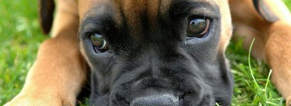 Причини за появата на секрети от очите при котки и кучета, първа помощ