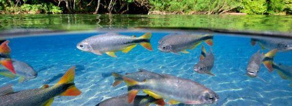 Рибата в езерото. Това, от което се нуждаят, са условия