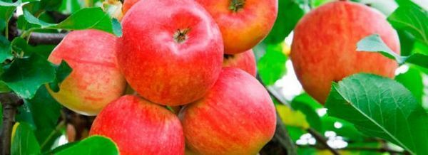 Разнообразие от ябълки