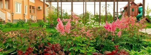 Създайте малка цветна градина
