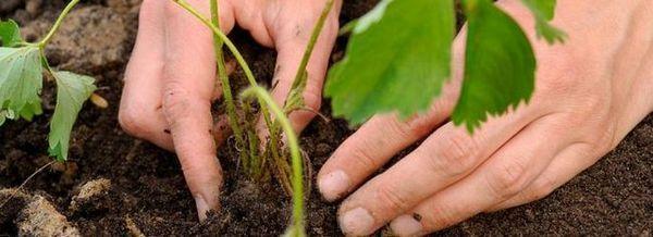 Засаждане на растения