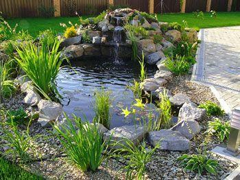 Избор на водни растения за езерото: снимка + функции на грижите