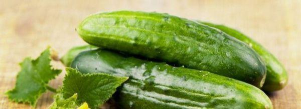 Отглеждане на краставици. Защита на корничник от болести и вредители