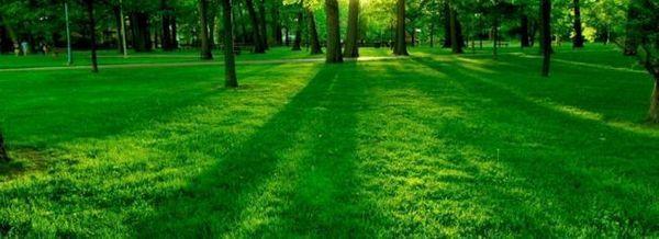 Зелена трева под дърветата