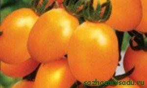 детерминиращ хибрид с оранжеви плодове Удивително F1